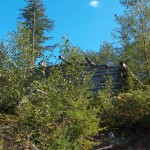 FiddleHead Farm Main House